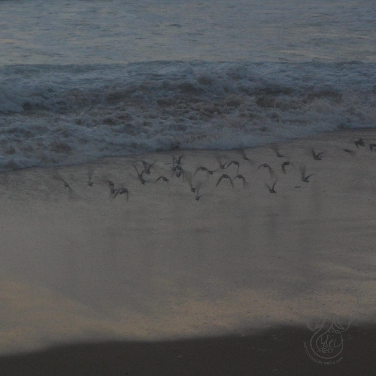 Birds on the Pacific Coast in California - Feature
