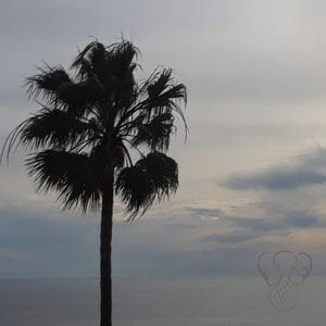 Palm trees over the Pacific Ocean - Feature