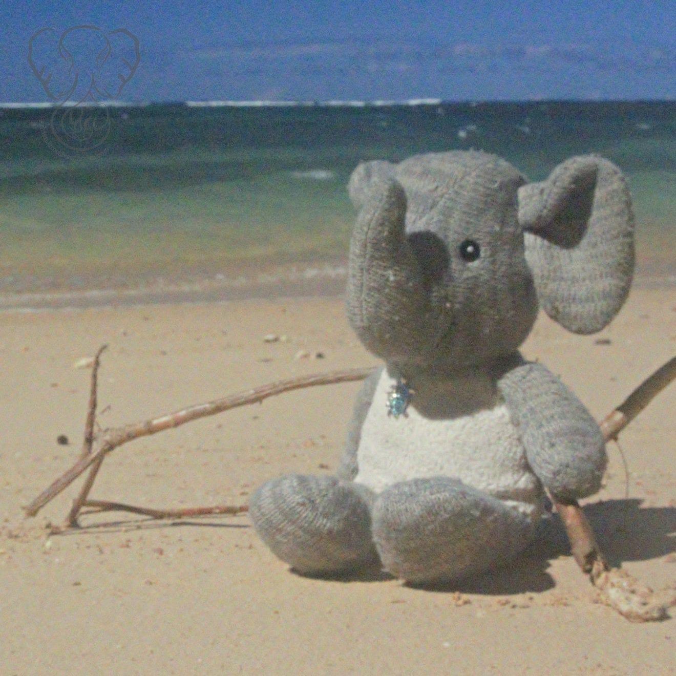 Adrian's Elephant at Anini Beach, Kaua'i, Hawai'i (Miranda Hernandez)