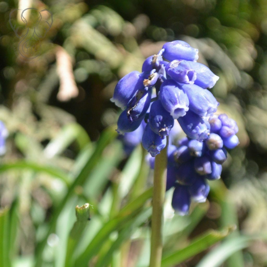 Wildflowers in Victoria, British Columbia, Canada (Miranda Hernandez)