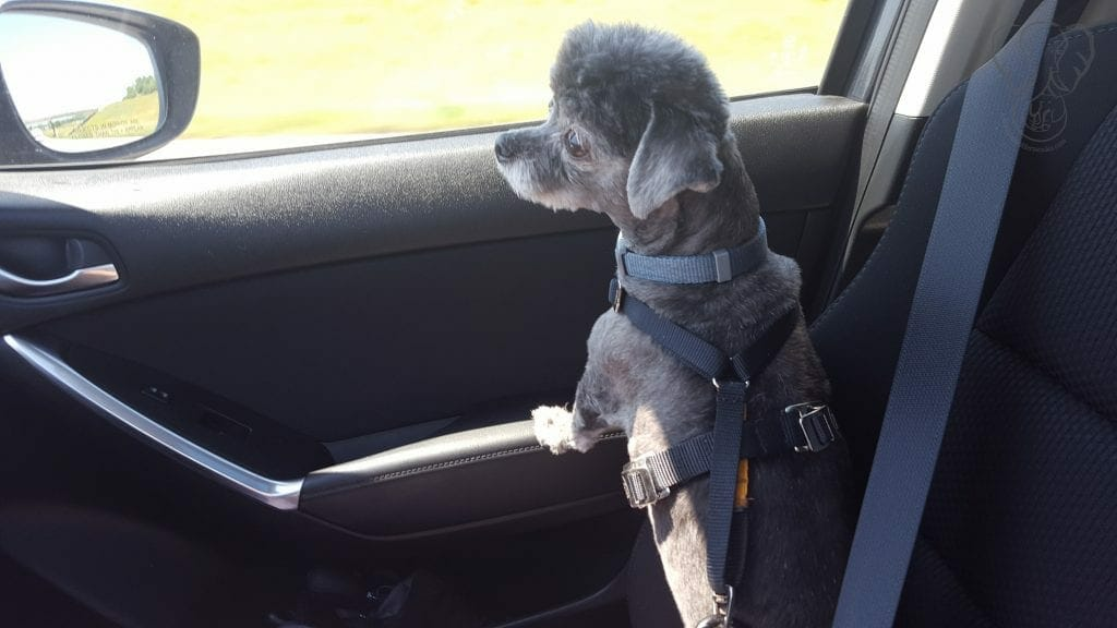Amy Anne in the passenger seat of a car, looking out the window on a sunny day (Miranda Hernandez)