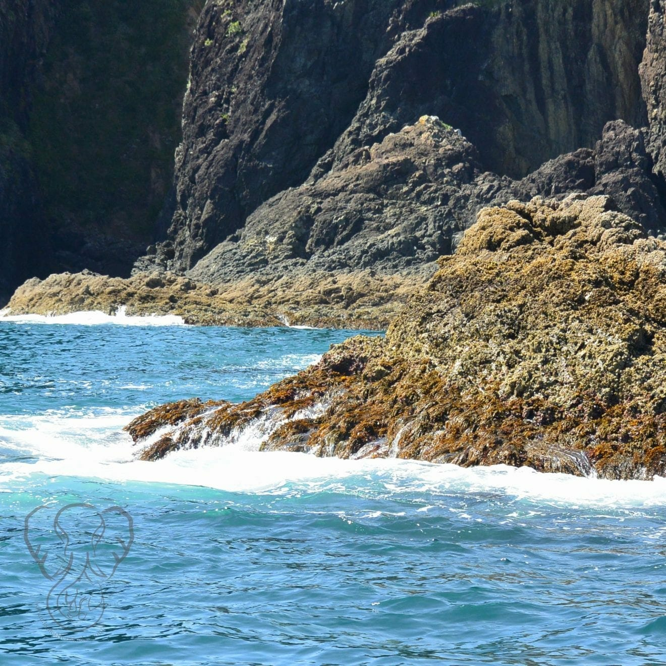 View of a small rocky island in the Bay of Islands, New Zealand (Miranda Hernandez)