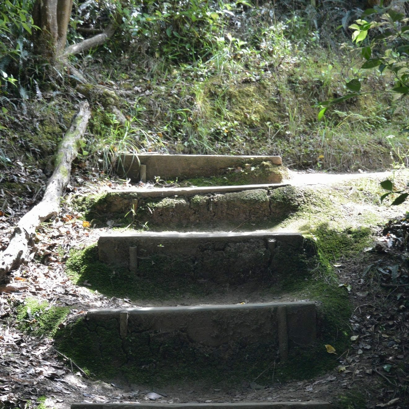 Rustic staircase carved into a trail in the Bay of Islands, New Zealand (Miranda Hernandez)