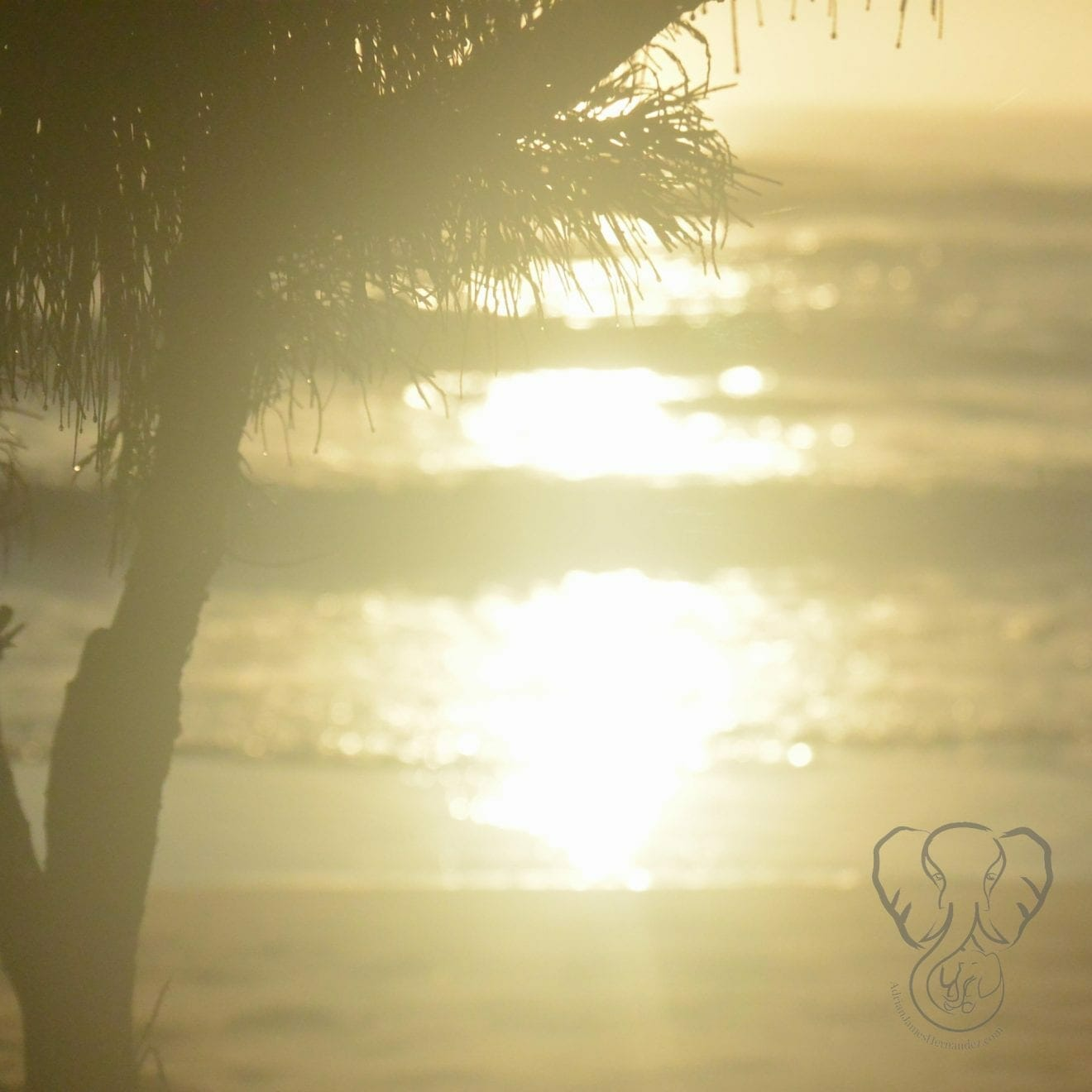 Sunrise in Kaua'i. Hawai'i (Miranda Hernandez)