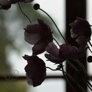 Flowers at St Katharines's Parmoor, Buckinghamshire, England (Miranda Hernandez)