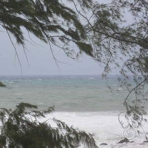 Tree branches over the Kawai'i coast (Miranda Hernandez)
