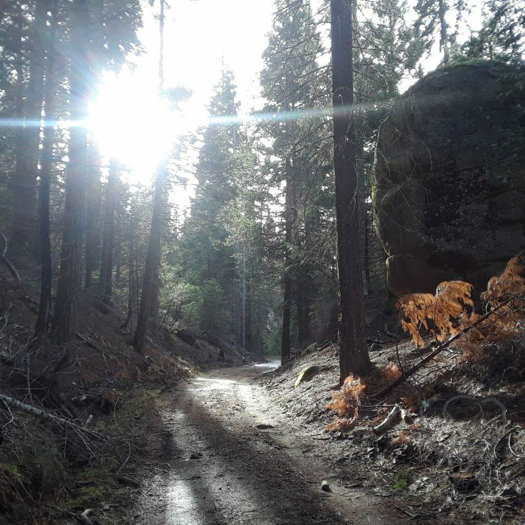 Trail in Pinecrest, California