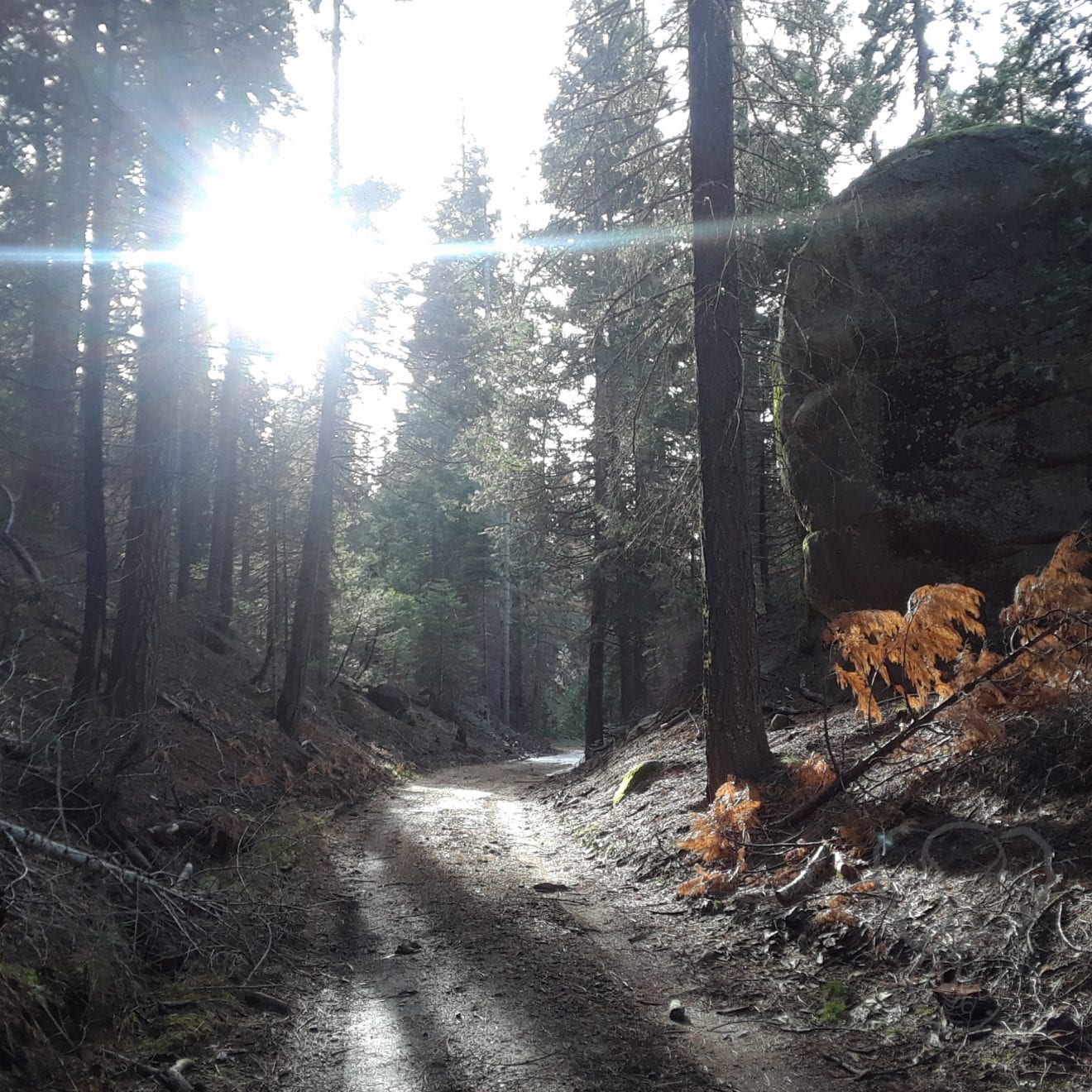 Trail in Pinecrest, California