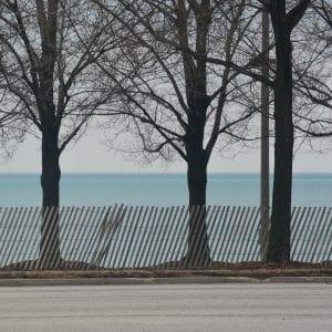 Trees along the shore of Lake Michigan, Chicago