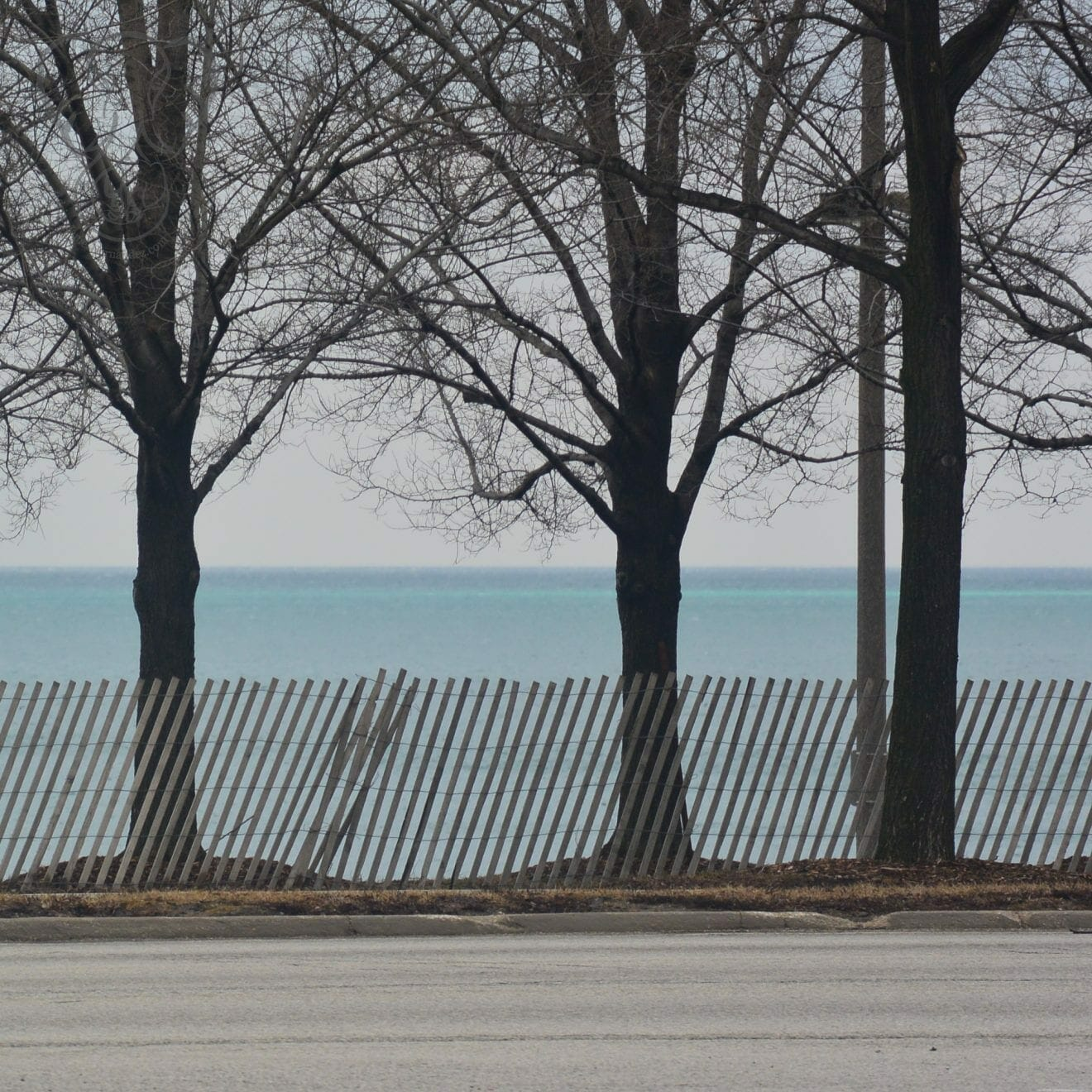 Trees along the shore of Lake Michigan, Chicago