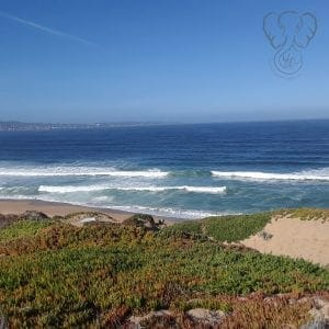 View of the beach in Monterey Bay, California