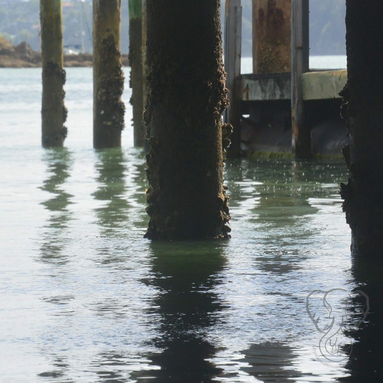 Pier in Paihia, New Zealand