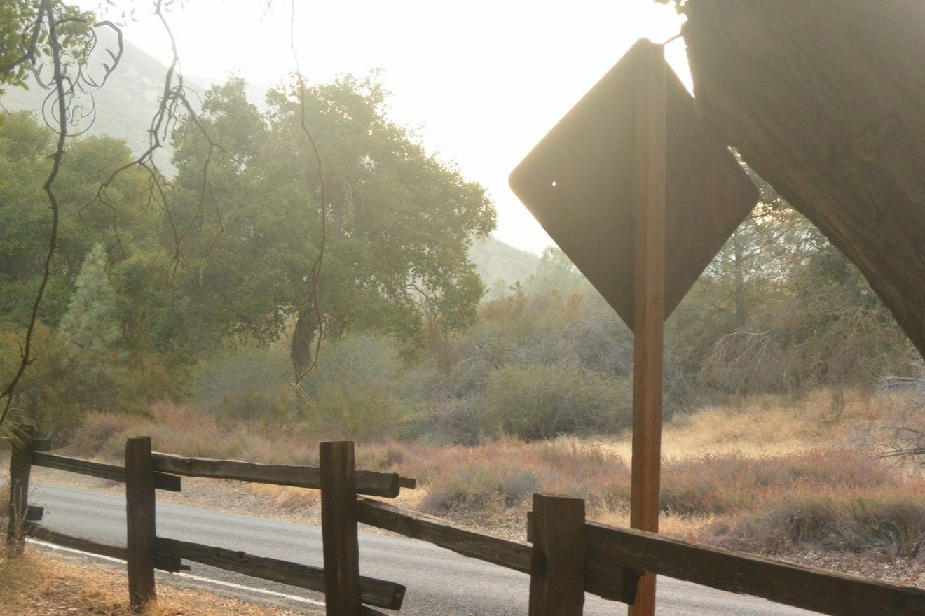 Trail at Pinnacles National Park. There is a wooden half-fence and the back of a sign in the foreground, and a few trees in the background (Miranda Hernandez)