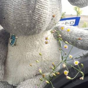 Wildflowers and Adrian's Elephant