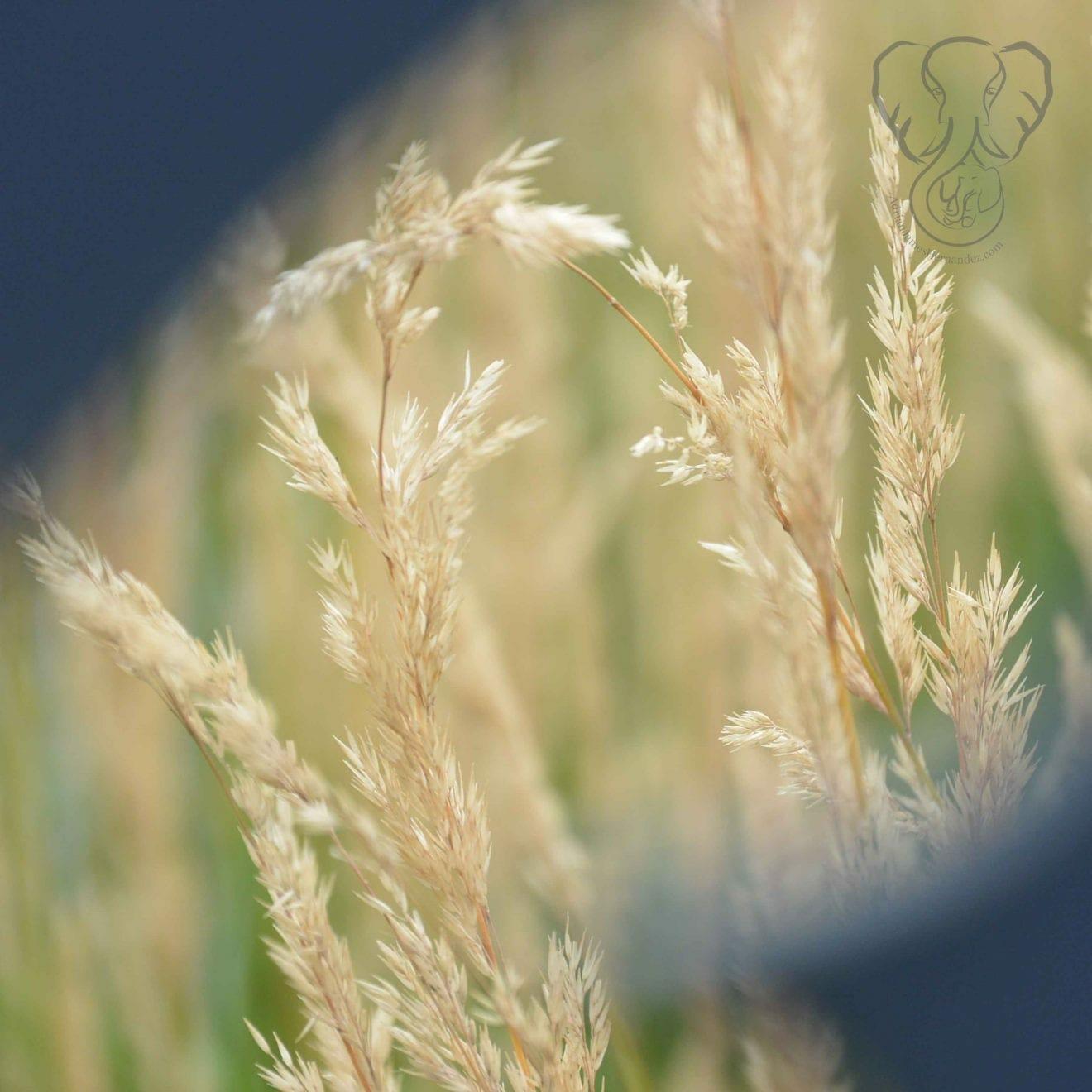 View from a butterfly cut-out, Assiniboine Park, Winnipeg, Manitoba (Miranda Hernandez)