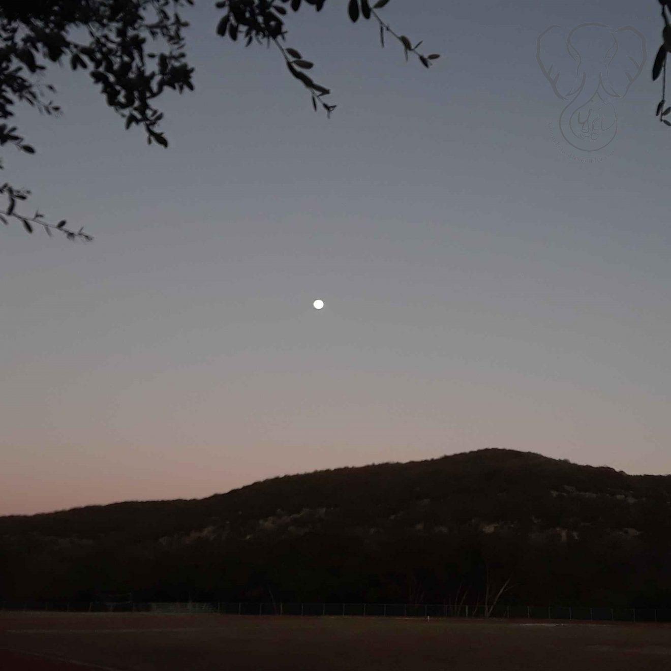 Full moon in Texas (Miranda Hernandez)