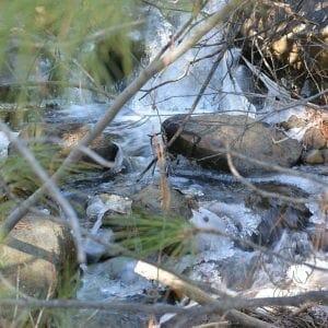 Stream, North Lake Tahoe, California (Miranda Hernandez)