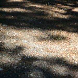 Shadows on a hike, California (Miranda Hernandez)