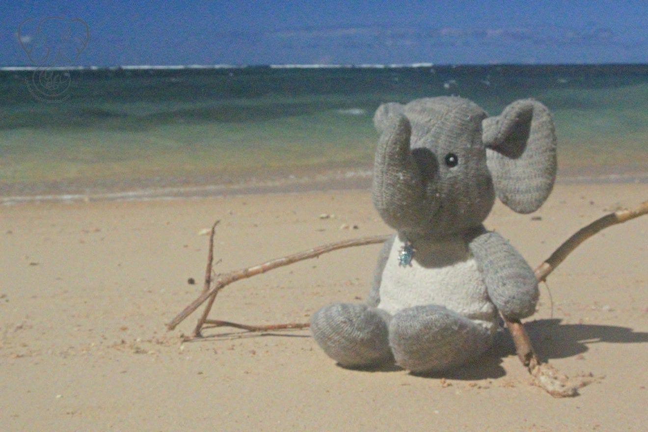 Guestbook - Adrian's Elephant at Anini Beach, Kaua'i, Hawai'i (Miranda Hernandez)