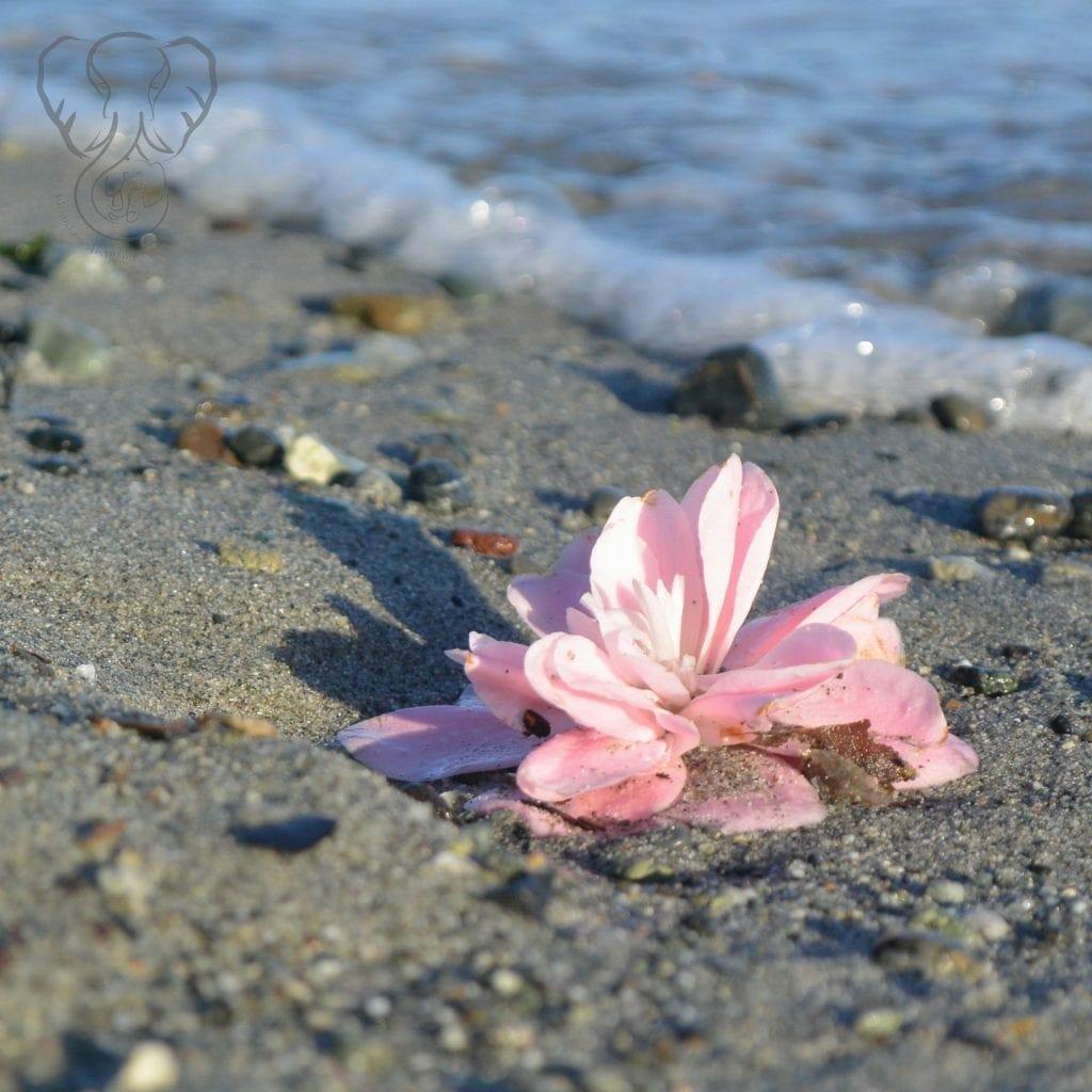 Esquimalt Lagoon, Victoria, British Columbia, Canada (Miranda Hernandez)
