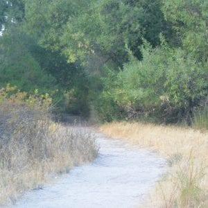 Trail in Pinnacles National Park, California (Miranda Hernandez)
