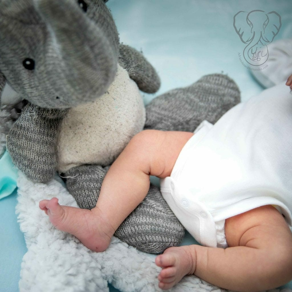 Adrian's Elephant and Peanut's feet (Sarah Perry Photography)