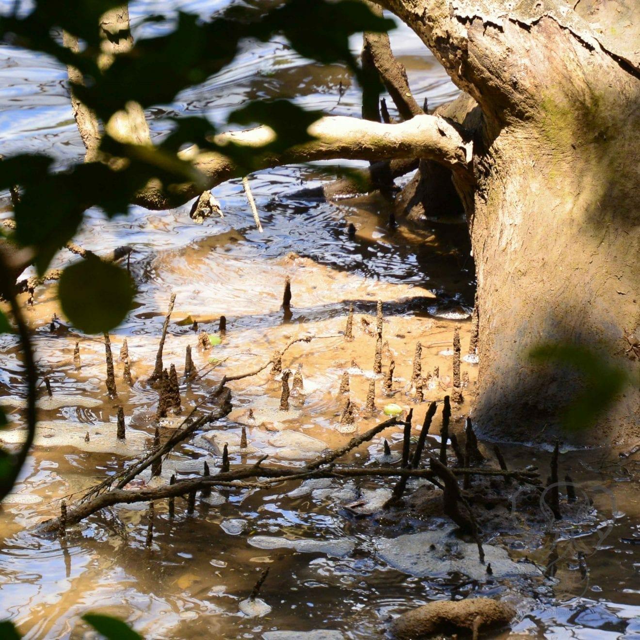Tree and roots on the Haruru Falls trail, Waitanga, New Zealand (Miranda Hernandez)