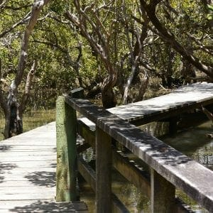 Walkway on the Haruru Falls trail, Waitanga, New Zealand (Miranda Hernandez)