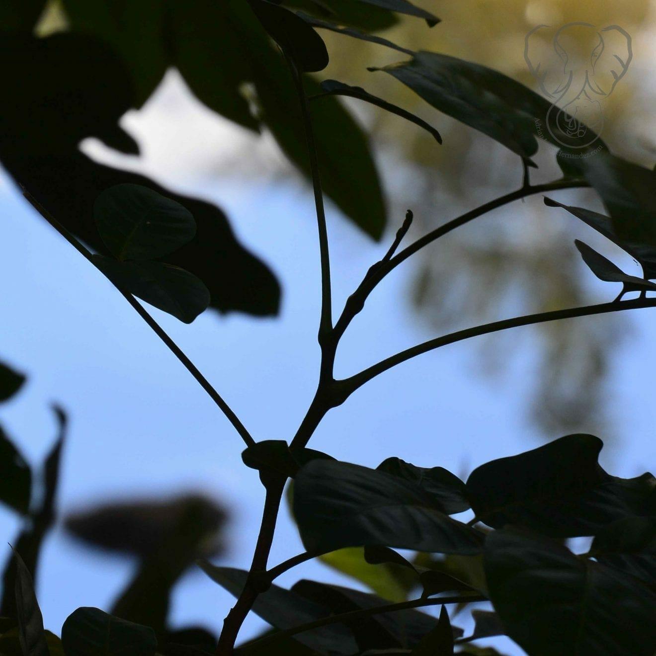 View through the plants on the Haruru Falls trail, Waitanga, New Zealand (Miranda Hernandez)