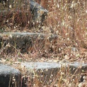 Staircase in California (Miranda Hernandez)