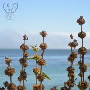 Flowers on the California coast (Miranda Hernandez)