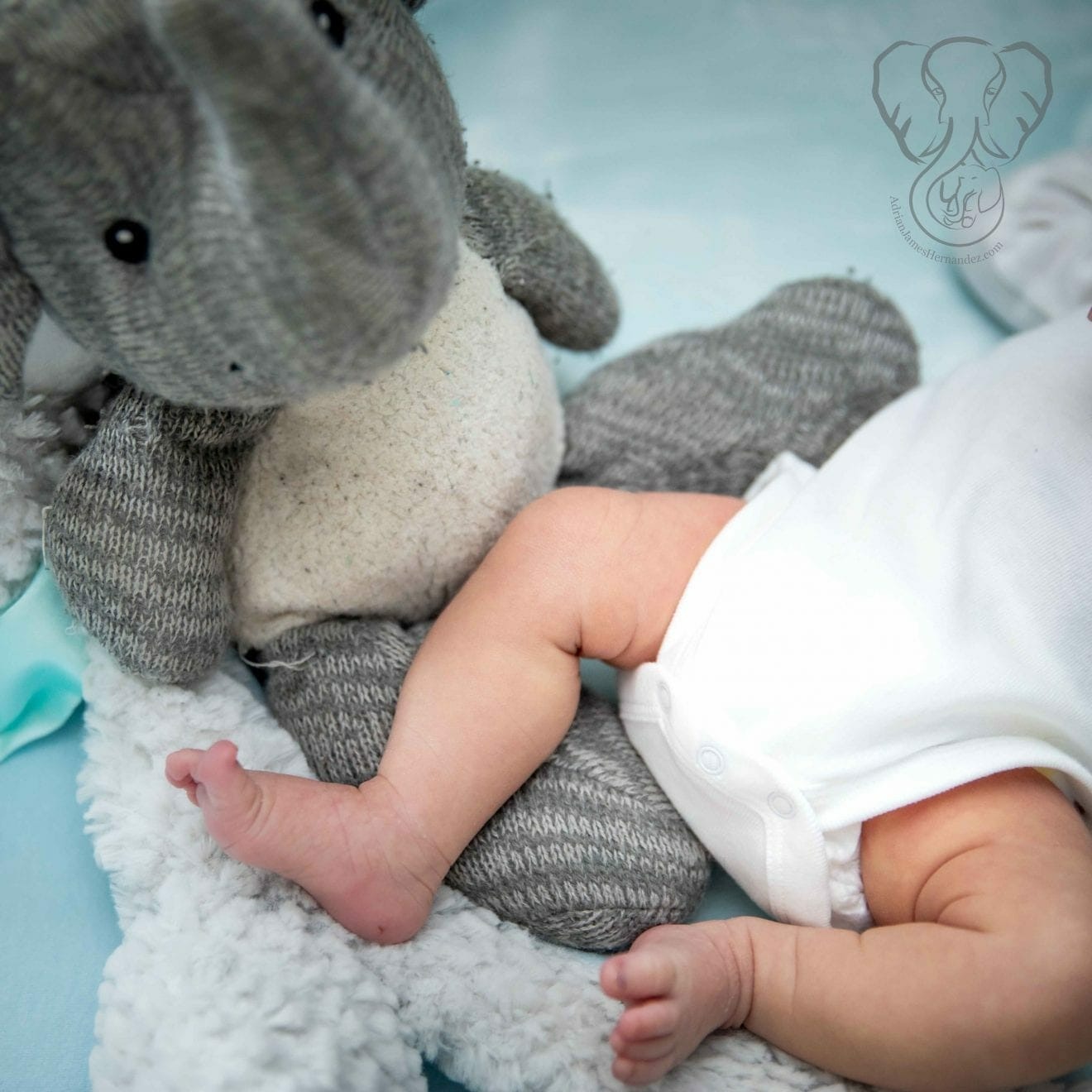 Peanut and Adrian's Elephant (Sarah Perry Photography)