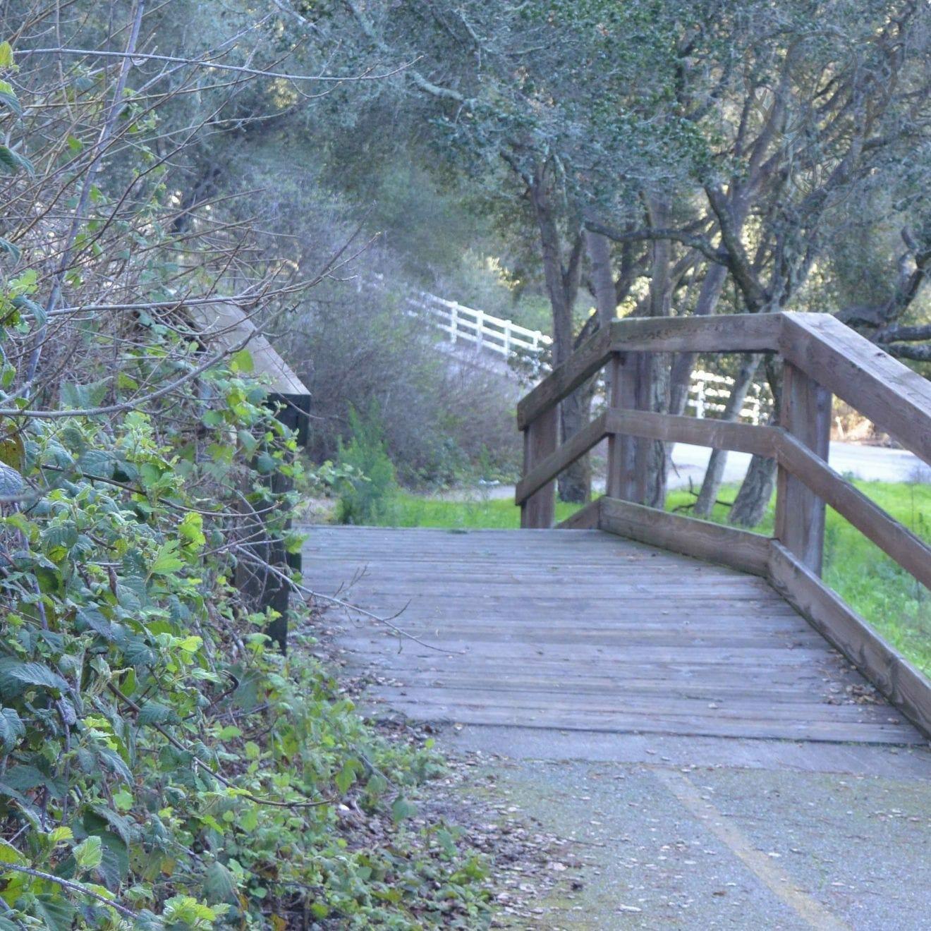 Bridge in California (Miranda Hernandez)