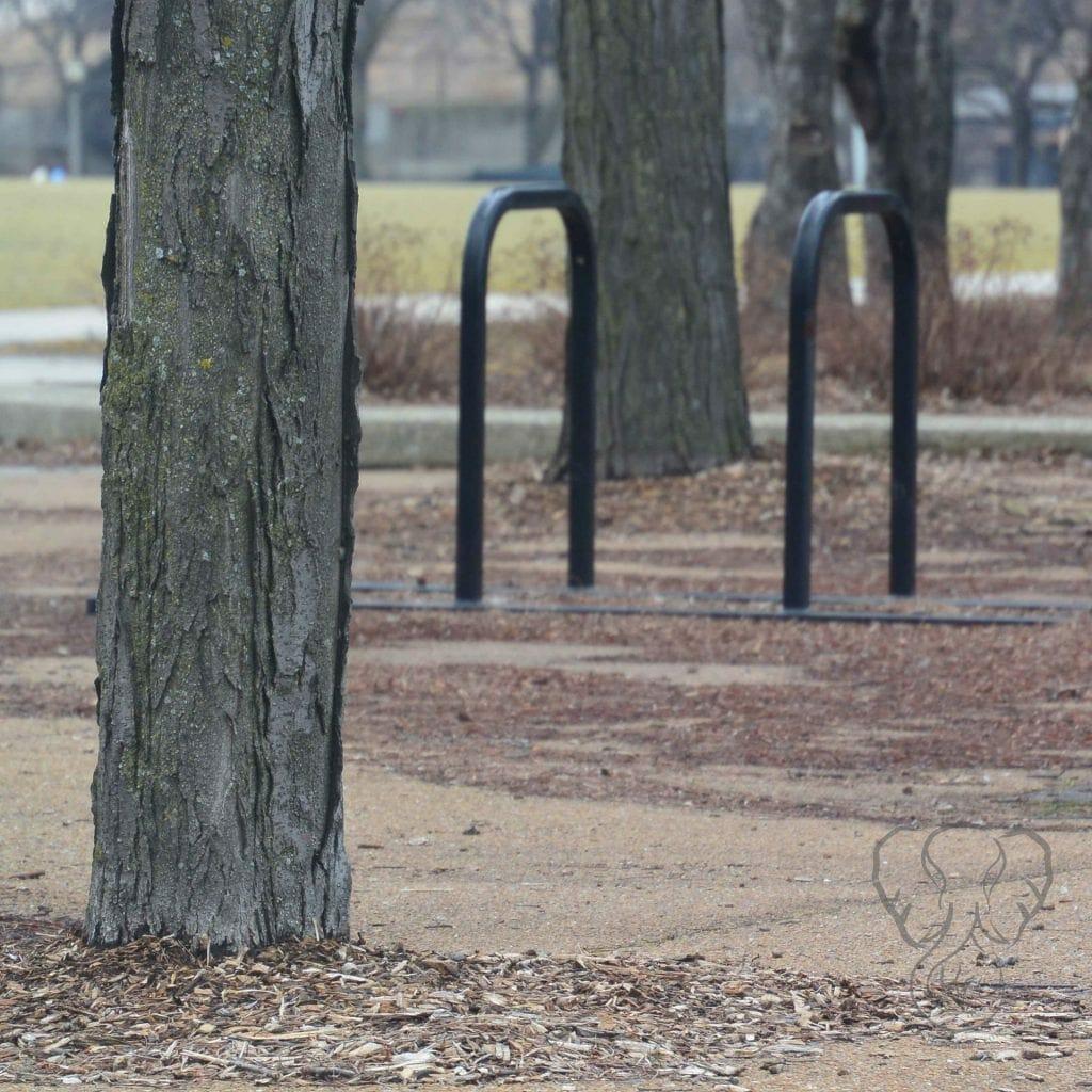 Park in Chicago, Illinois (Miranda Hernandez)
