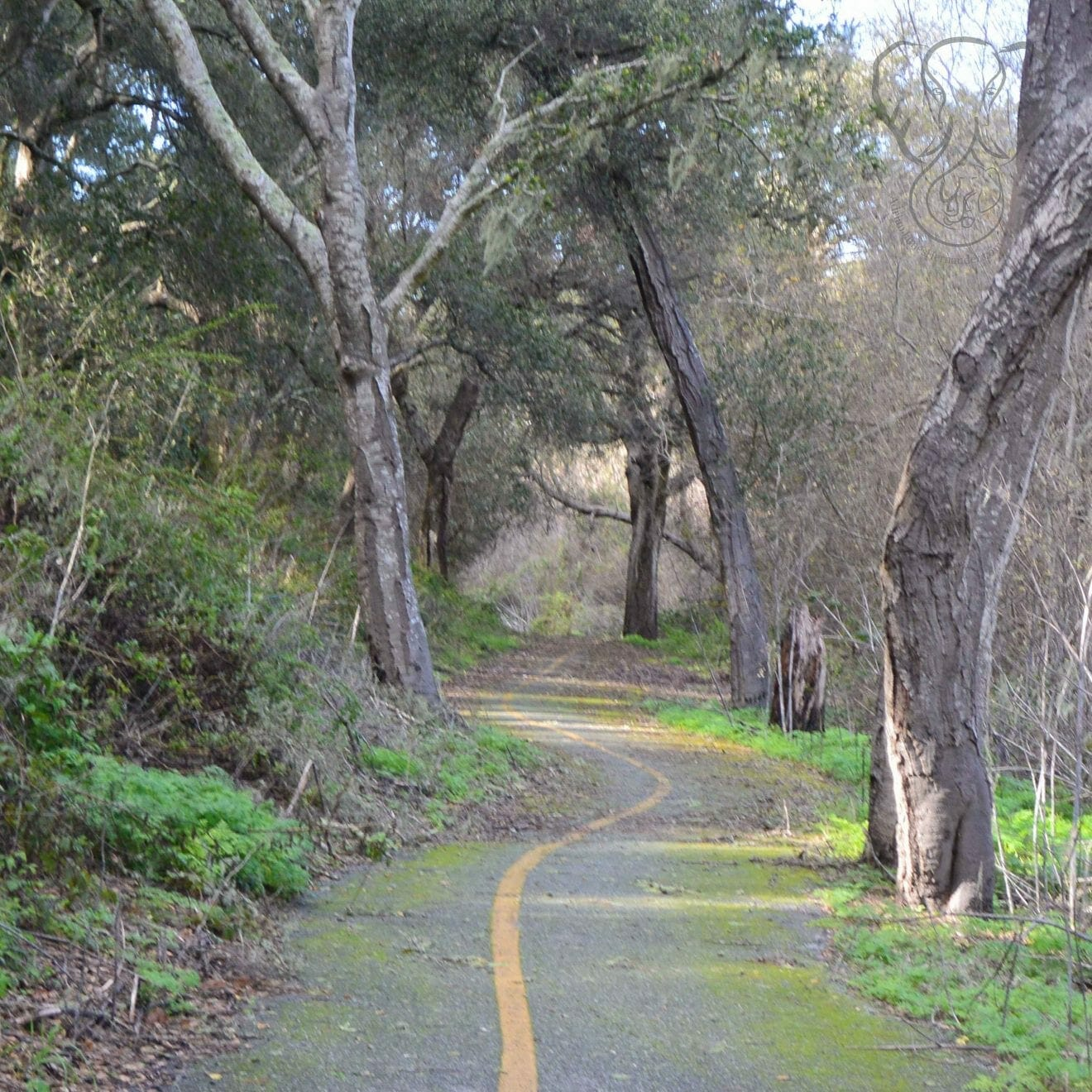 Bike path in California (Miranda Hernandez)