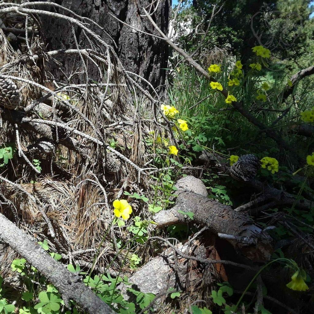 Flowers on a fallen tree limb, California (Miranda Hernandez)