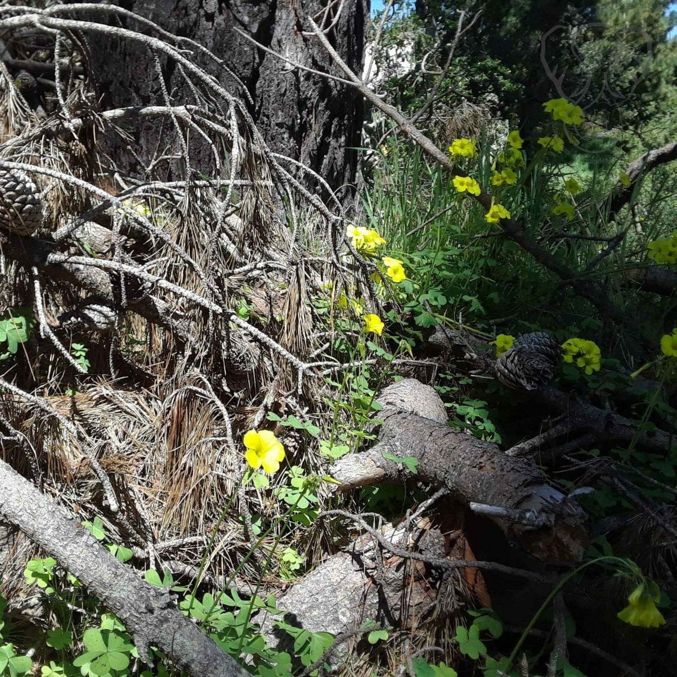 Flowers on a fallen tree limb, California (Miranda Hernandez)