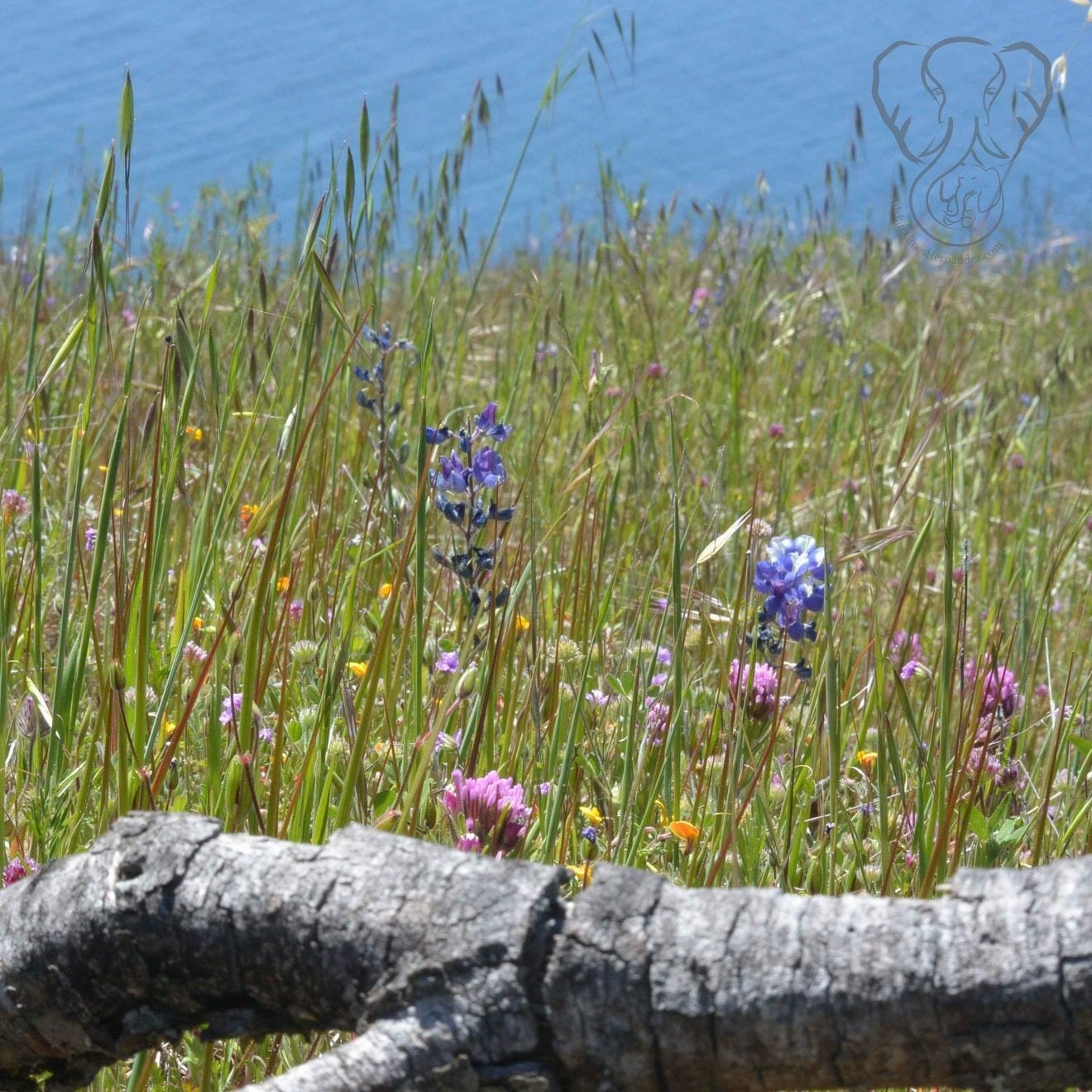 Wildflowers in Big Sur, California (Miranda Hernandez)