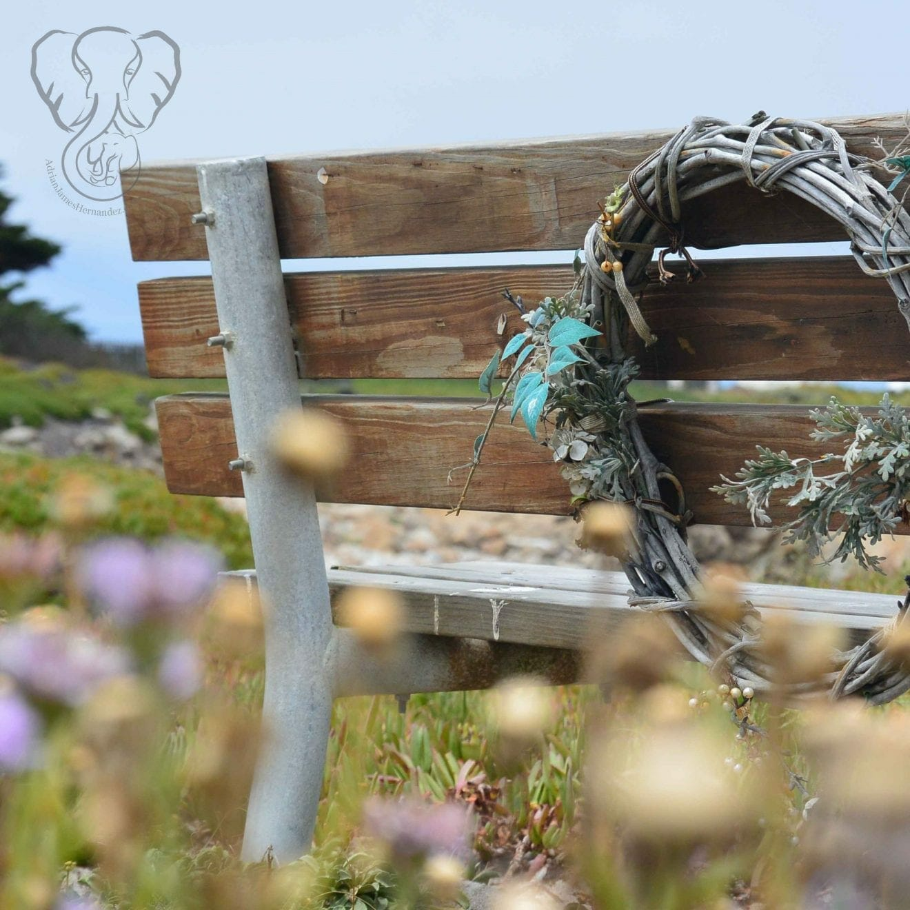 Bench on the California coast (Miranda Hernandez)