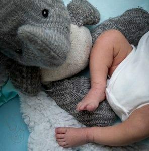 Peanut with Adrian's Elephant