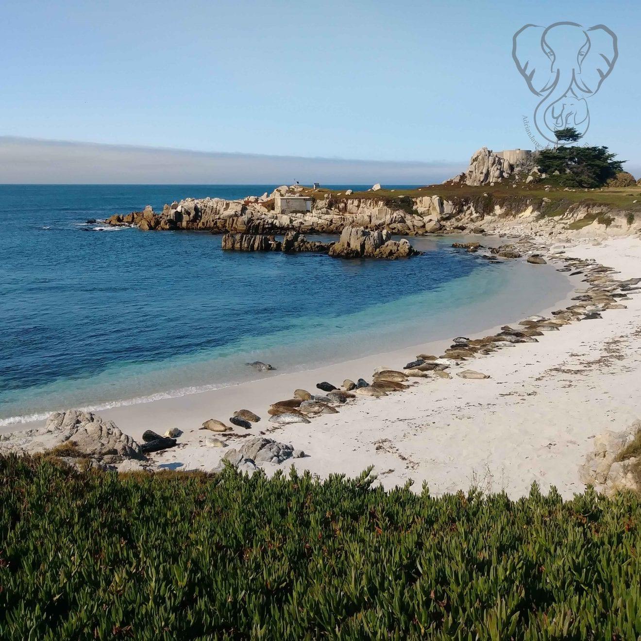 Sea lions on the California coast (Miranda Hernandez)
