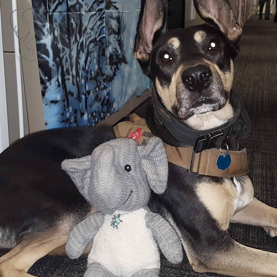 Adrian's Elephant and Romeo