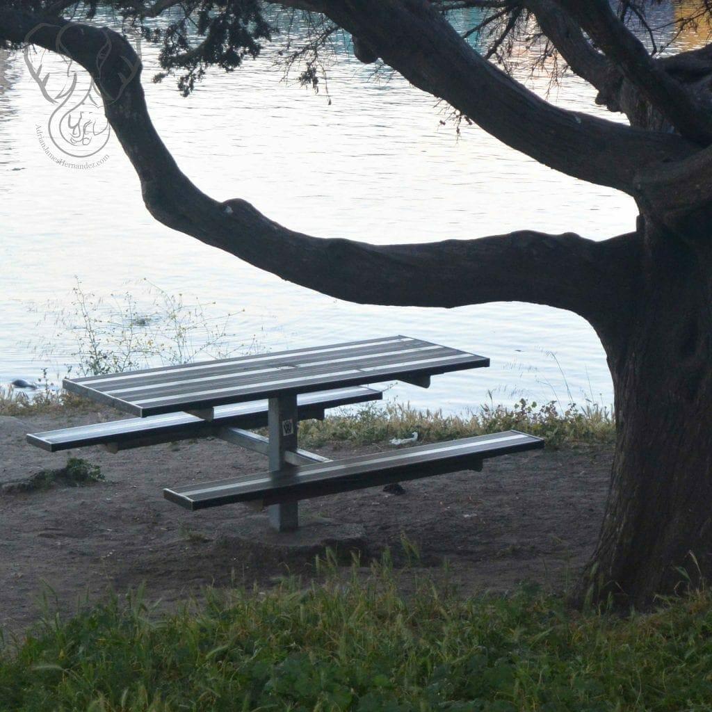 Empty bench, California (Miranda Hernandez)