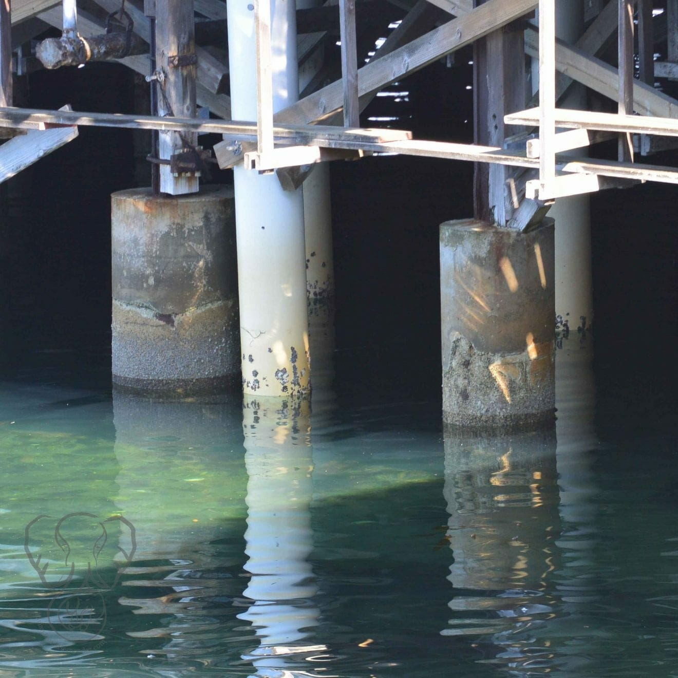 Pylons under a pier in California (Miranda Hernandez)