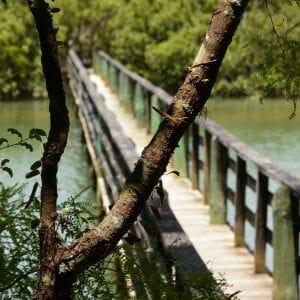 Bridge on the Haruru Falls trail, Waitanga, New Zealand (Miranda Hernandez)