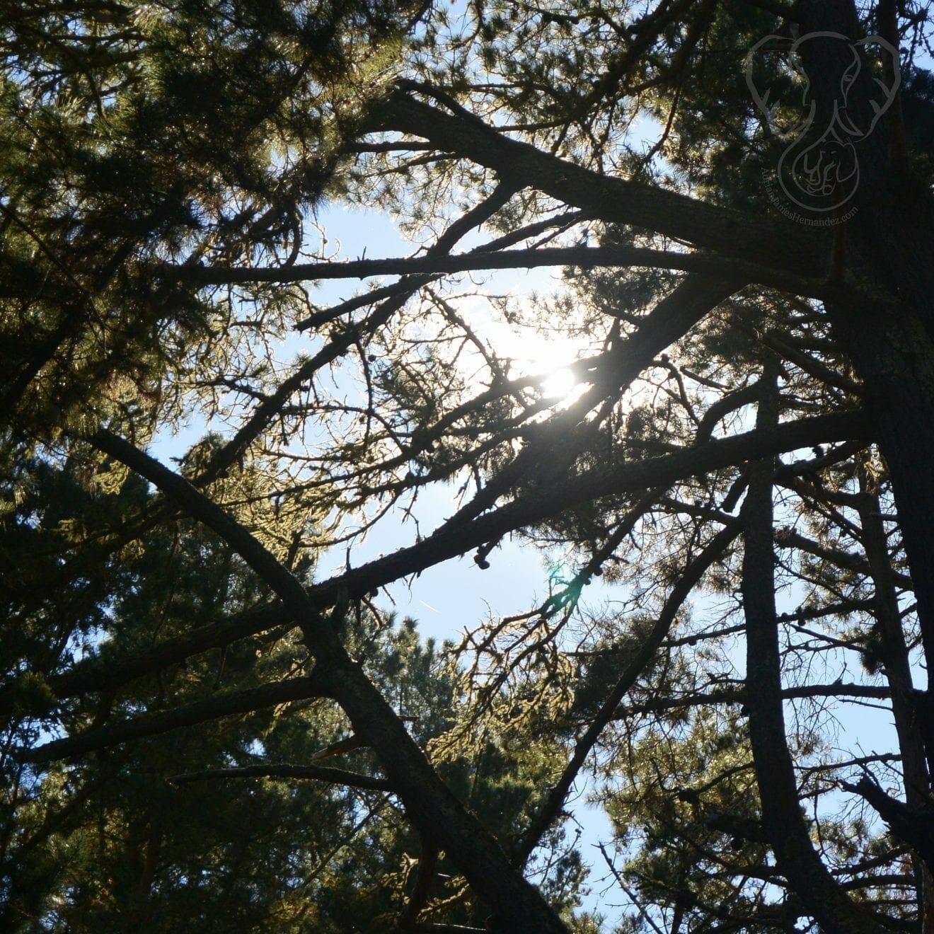 Sunlight through the trees, North Lake Tahoe, California (Miranda Hernandez)