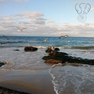 Seagulls on the California coast (Miranda Hernandez)