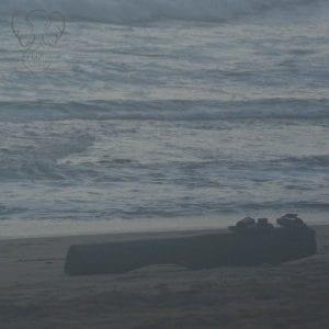 Driftwood log on the shore of Nukoli'i Beach park, Kaua'i, Hawai'i (Miranda Hernandez)
