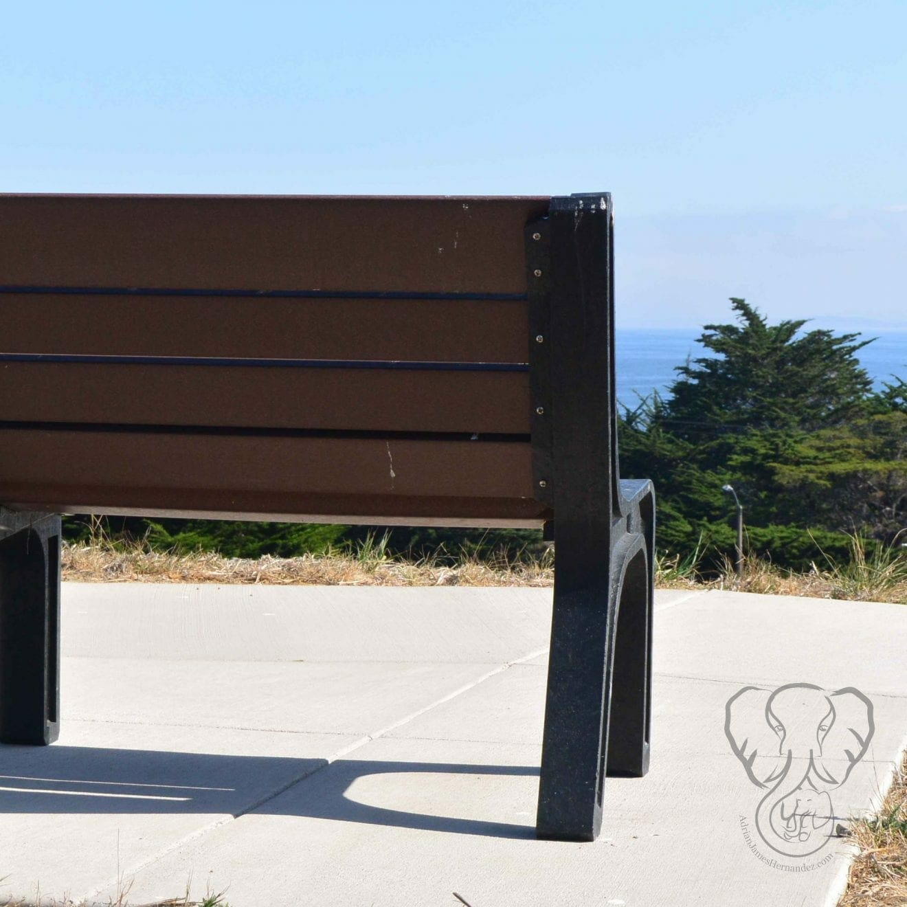 Bench in California (Miranda Hernandez)