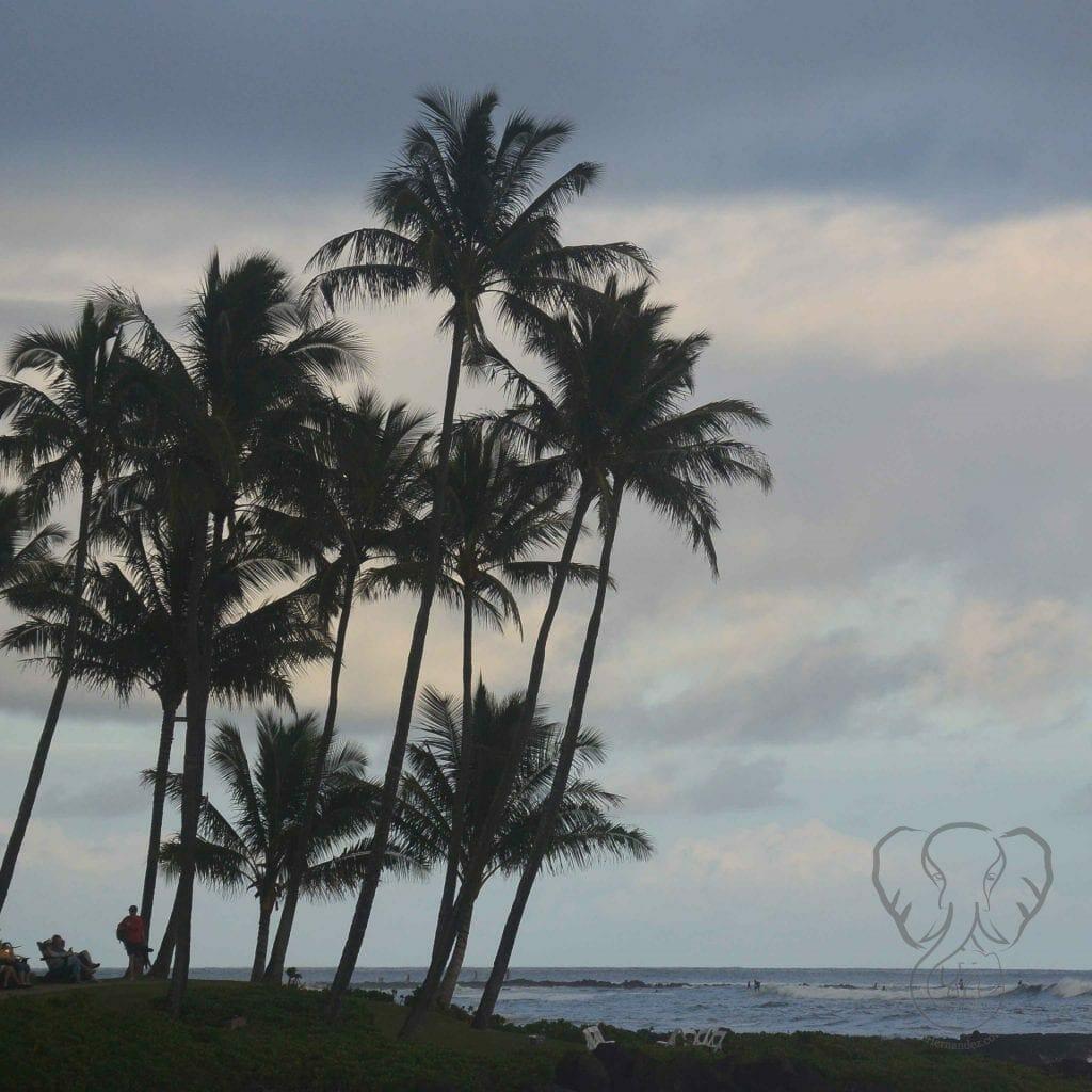 Palm tree over the ocean in late afternoon in Kaua'i, Hawai'i (MIranda Hernandez)